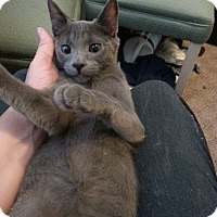 Adopt A Pet :: Griffin - Walla Walla, WA
