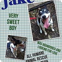 Adopt A Pet :: Jake - Wanaque, NJ