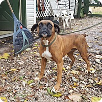 Adopt A Pet :: Harriet ADOPTED!! - Antioch, IL