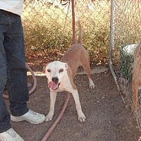 Adopt A Pet :: Dakkar - Golden Valley, AZ