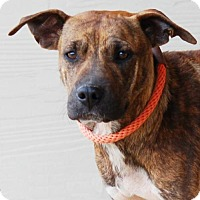 Adopt A Pet :: Cricket - Toccoa, GA