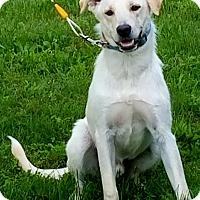 Adopt A Pet :: Sampson - New Oxford, PA