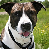 Adopt A Pet :: Peter - Bellingham, WA