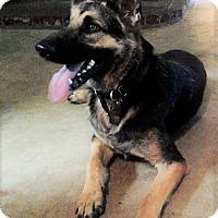 Adopt A Pet :: Cali - Pleasant Grove, CA