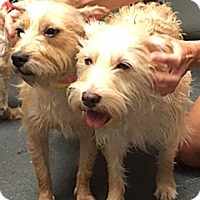 Adopt A Pet :: BELLA, BETH, BOBBY & BENNY - NYC, NY