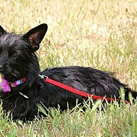 Adopt A Pet :: Millie - Winters, CA