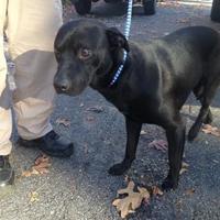 Adopt A Pet :: Buddy - Clarkesville, GA