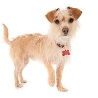 Adopt A Pet :: Mossie - San Diego, CA