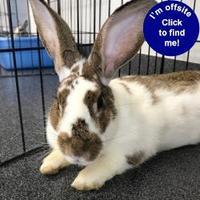 Adopt A Pet :: Wisteria - Hilliard, OH