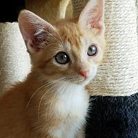 Adopt A Pet :: Nugget - Colfax, IA