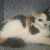 Adopt A Pet ::  - Camarillo, CA