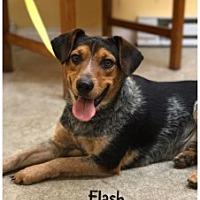 Adopt A Pet :: Flash - Butler, KY