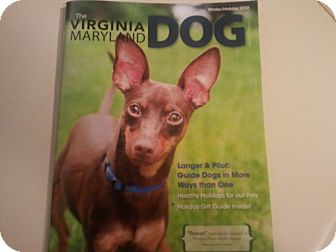 Miniature Pinscher Dog for adoption in Myersville, Maryland - Duncan