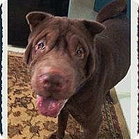 Adopt A Pet :: Kuji - Houston, TX