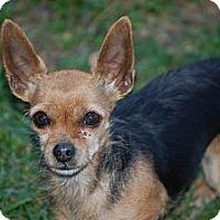 Adopt A Pet :: Holly - Kempner, TX