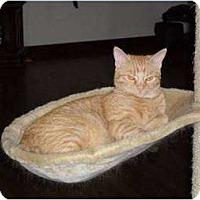 Adopt A Pet :: Olive - Farmington, AR