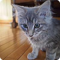 Adopt A Pet :: Trisha - Bedford, MA