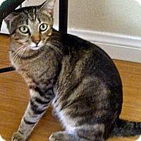 Adopt A Pet :: Flynn - Escondido, CA