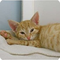 Adopt A Pet :: Starburst - Maywood, NJ