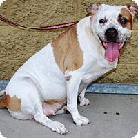 Adopt A Pet :: China - Gilbert, AZ