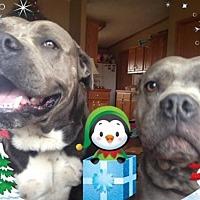 Adopt A Pet :: Dozer - Centerburg, OH