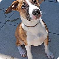 Adopt A Pet :: Fred - Madison, AL
