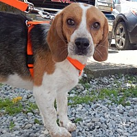 Adopt A Pet :: Boltzi - Washington, PA