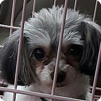 Adopt A Pet :: Lilly Belle - Alpharetta, GA