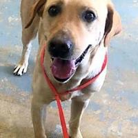 Adopt A Pet :: Buster(PAWS) - Brownwood, TX