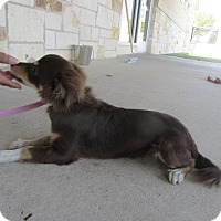 Adopt A Pet :: Noah - North Richland Hills, TX
