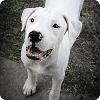 Adopt A Pet :: Mookie - Killeen, TX