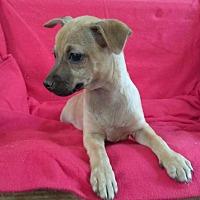 Adopt A Pet :: Midge - West Springfield, MA