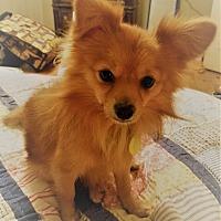 Adopt A Pet :: Mesa - conroe, TX