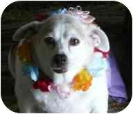 Beagle Mix Dog for adoption in Boca Raton, Florida - Trixie