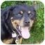 Photo 1 - Rottweiler Mix Dog for adoption in Berkeley, California - Brando