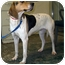Photo 1 - Coonhound (Unknown Type) Mix Dog for adoption in Tipton, Iowa - Jackie