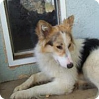 Adopt A Pet :: Luke - Gardena, CA