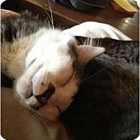 Adopt A Pet :: Davidson - Wenatchee, WA