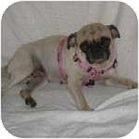 Adopt A Pet :: Ms. Puggie - Windermere, FL