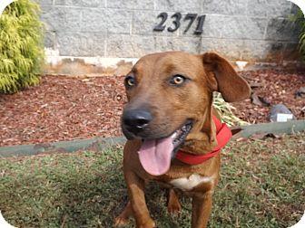 Hound (Unknown Type) Mix Dog for adoption in Thomaston, Georgia - Rasha