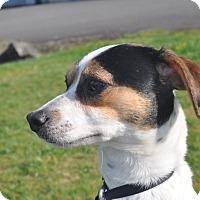 Adopt A Pet :: Henry - Tumwater, WA