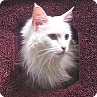 Adopt A Pet :: Shalimar - Davis, CA