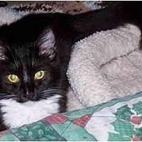 Adopt A Pet :: Brenna - Simms, TX