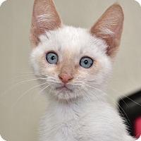 Adopt A Pet :: Perla - Davis, CA