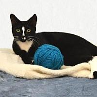 Adopt A Pet :: Parker - Taylor, MI