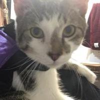 Adopt A Pet :: Phil - Columbia, SC