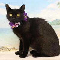 Adopt A Pet :: Elena - Harrisonburg, VA