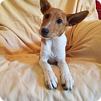 Adopt A Pet :: Gretel (adopted) - Trenton, NJ