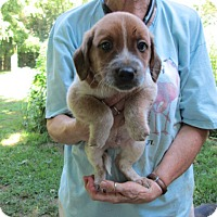 Adopt A Pet :: MURPH - Lincolndale, NY
