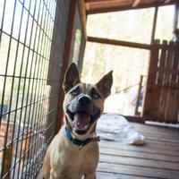 Adopt A Pet :: Wolfe - Eugene, OR